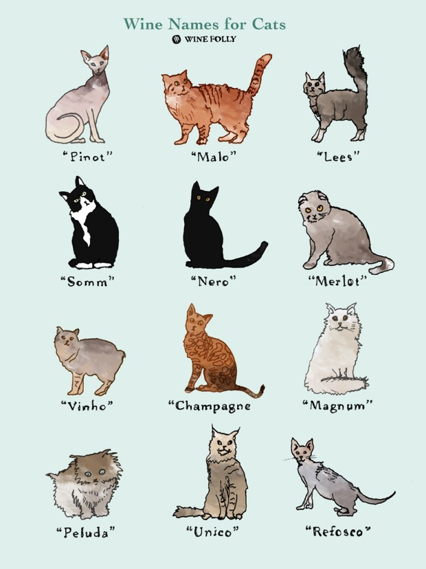 wine-names-for-cats